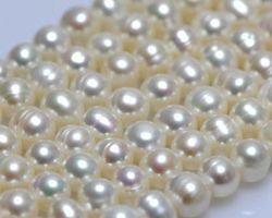 Colier de perle blanche | 113