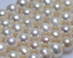Colier de perle blanche/lavande | 116