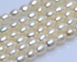 Colier de perle blanche/lavande | 123